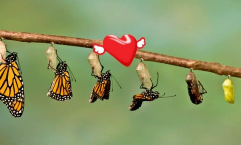 metamorfosis cinta
