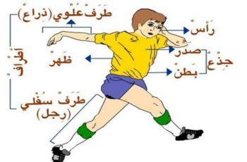 bahasa arab anggota tubuh