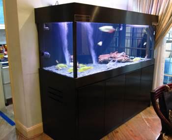 Susunan Filter Aquarium Arwana Allcanwear Org