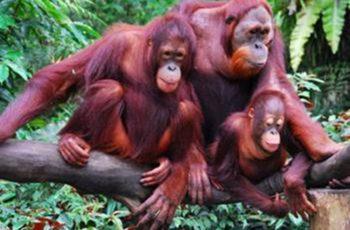 hewan langka indonesia
