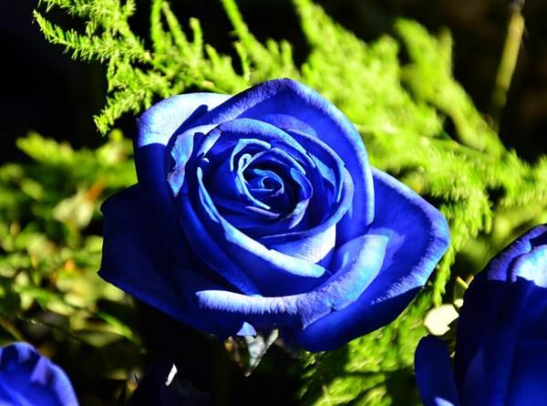 12 Arti Bunga Mawar Berdasarkan Warna Dan Jumlah Tangkainya Diedit Com