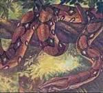 ular raksasa