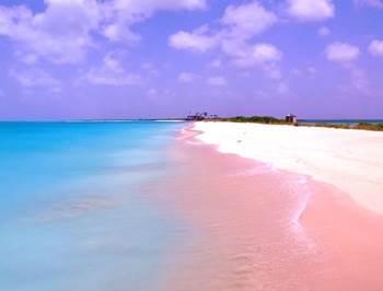 pantai pink bahama