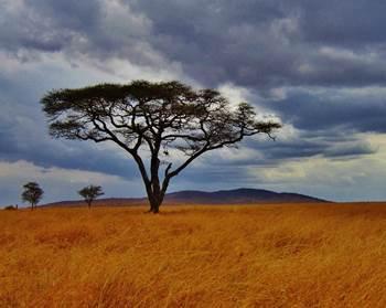 panorama tanzania