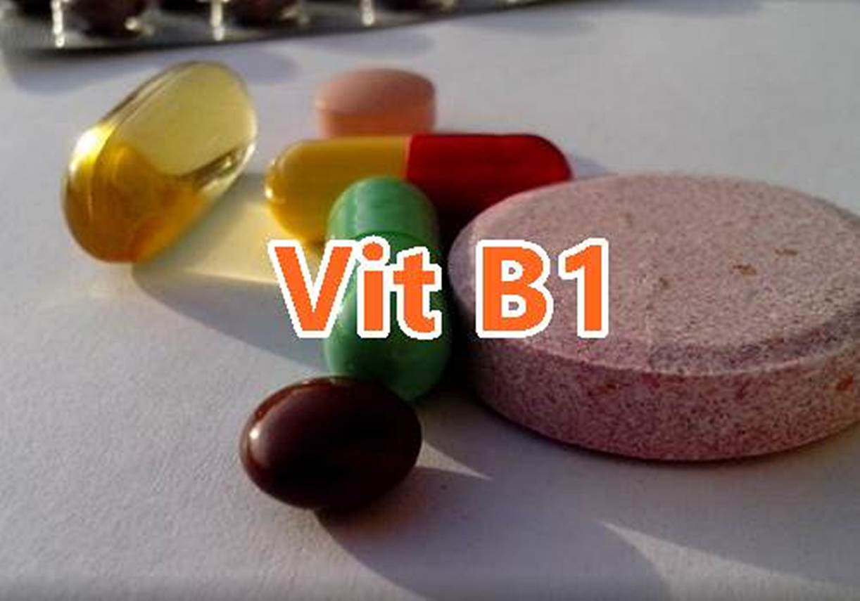 fungsi vitamin b1