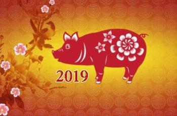 ramalan shio 2019 tahun babi