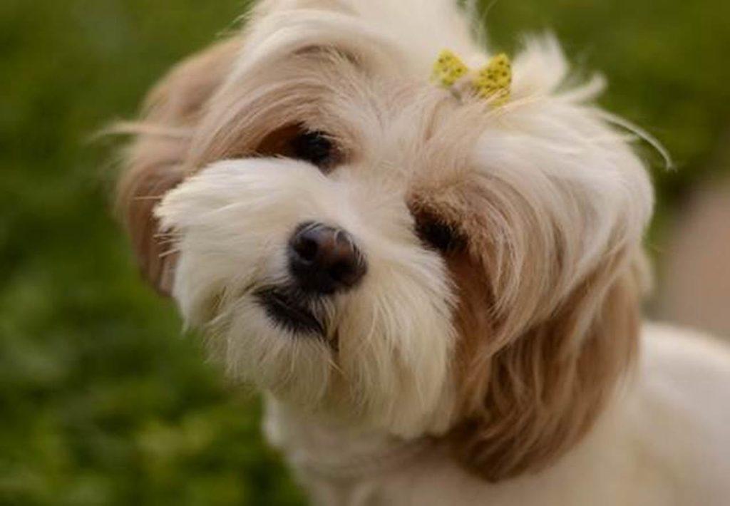 60 Nama Anjing Terunik Dan Artinya, Populer 2019