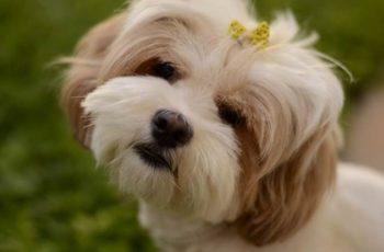 nama anjing betina