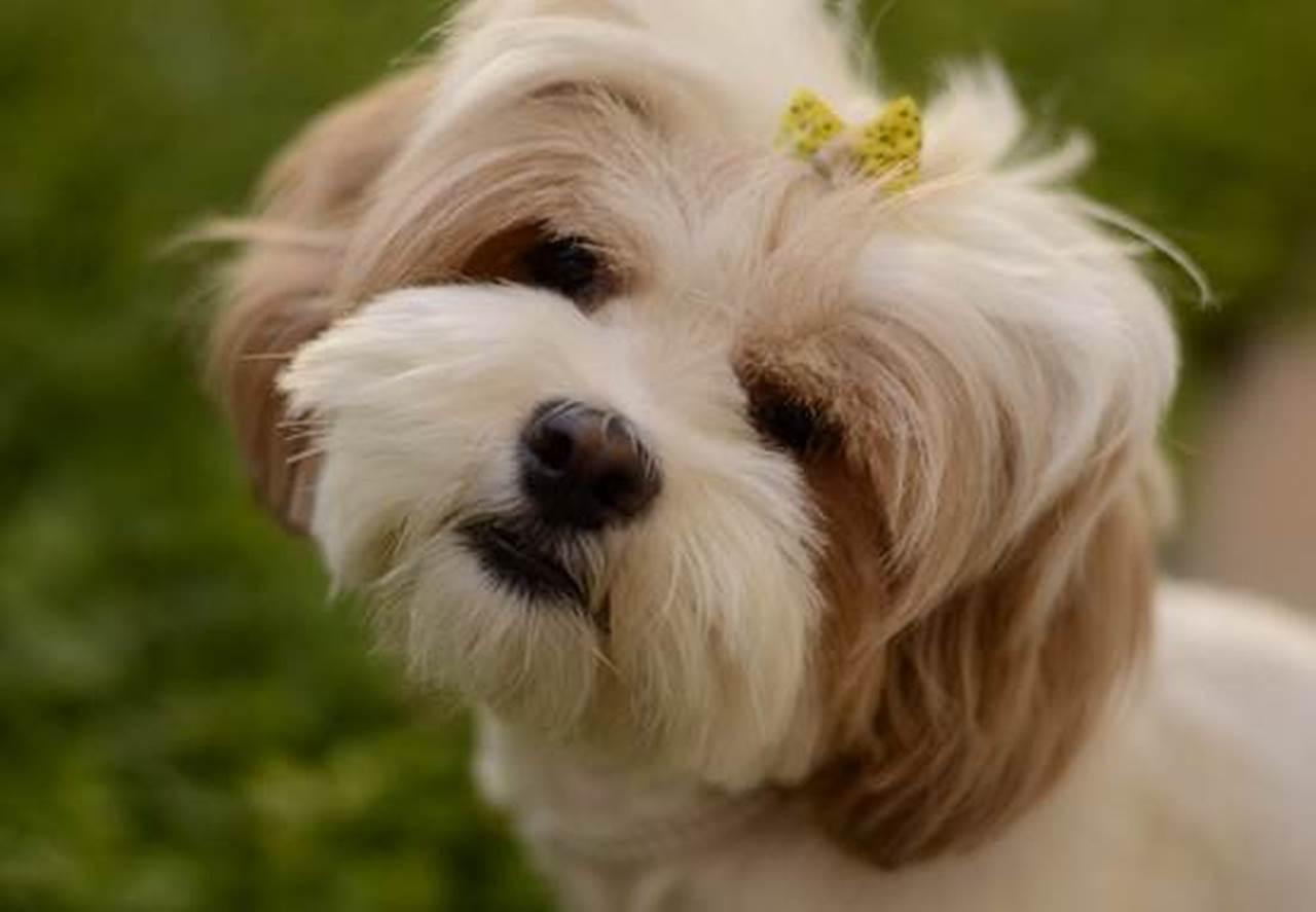 100 Nama Anjing Terunik Dan Artinya Populer 2020 Dit