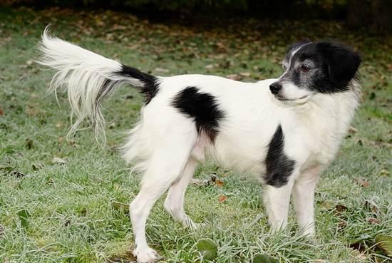 28++ Nama anjing warna hitam terbaru