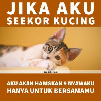 kata kata indah kucing