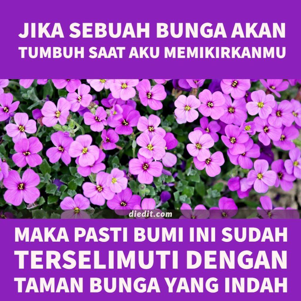 kata romantis bunga Jika sebuah bunga akan tumbuh saat aku memikirkanmu, maka pasti seluruh bumi ini sudah terselimuti dengan taman yang indah.