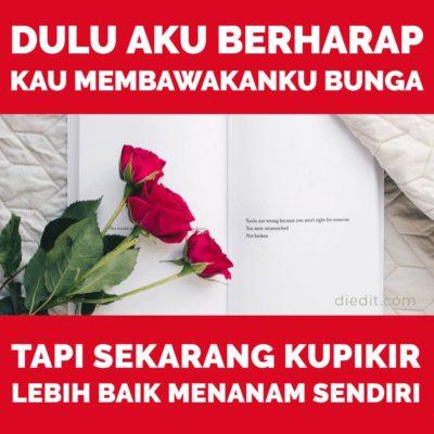 kata sedih - Dulu aku berharap kau membawakanku bunga. Tapi sekarang kupikir lebih baik menanam sendiri.