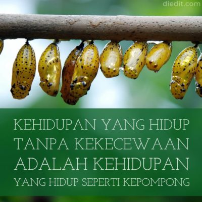 kata bijak kecewa - Kehidupan yang hidup tanpa kekecewaan adalah kehidupan yang hidup dalam kepompong.