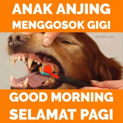 pantun selamat pagi