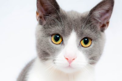 nama kucing korea
