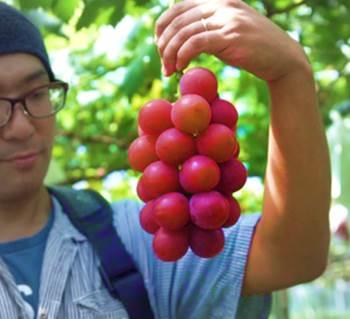 anggur mahal
