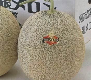 melon mahal