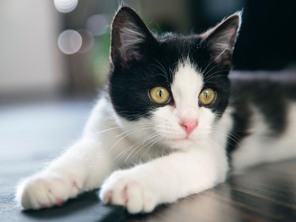 1555 Nama Bagus Cantik Untuk Kucing Lucu Dan Manja Diedit Com