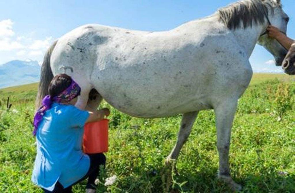 susu kuda - Khasiat Dan Manfaat Dari Susu Kuda